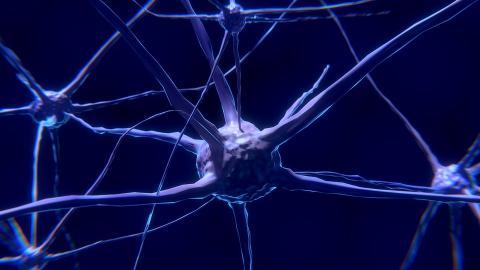 신경세포 개념도. 두뇌신경전달물질의 영향을 받는다. ⓒPixabay