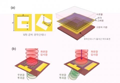 그림(a) 왼쪽은 U형 금박 광학안테나(a=76㎛, b=51㎛, w=19㎛)이고 오른쪽은 연구진이 개발한 그래핀 메타표면 구조도. 그림(b)는 서로 다른 기하학적 위상 차이 때문에 좌편광 입사광이 우편광 투과광으로 바뀌는 모습을 표현했다. 광학안테나 방향을 바꿔 선형 위상 차이를 갖는 메타표면을 설계하면 빛의 굴절 방향을 조절할 수 있다.  ⓒ 기초과학연구원
