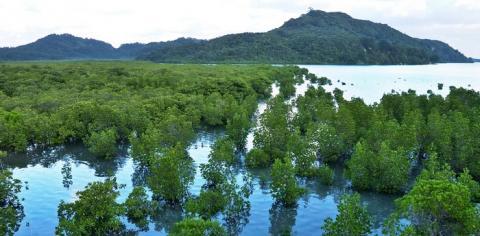 정부가 국제 사회에 제안했던 습지도시 인증제도가 결실을 맺을 전망이다.