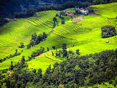 물이 많이 필요한 쌀 재배 대신 물을 적게 사용하는 다른 농작물로 대체하면 더 많은 사람에게 식량을 공급할 수 있다.  Photo: Amol Hatwar via Flickr / Earth Institute, Columbia Univ.