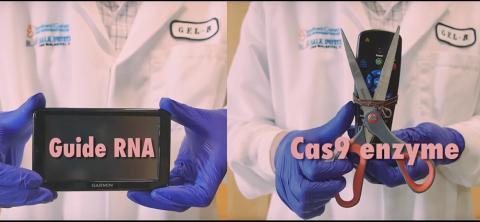 기존의 CRISPR/Cas9 유전자 가위는 가이드 RNA가 유전체의 위치를 지정하면 Cas9효소가 이를 절단했으나 돌연변이 위험이 높아 인체 적용에 우려가 높았다.  CREDIT: Salk Institute