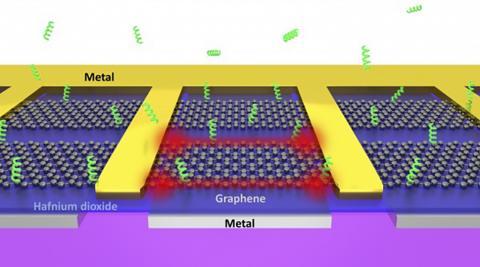 약한 전기로 구동되는 그래핀의 예리한 가장자리는 용액 속의 생체분자를 신속하게 포집할 수 있는 '집게' 역할을 할 수 있다.  In-Ho Lee, University of Minnesota