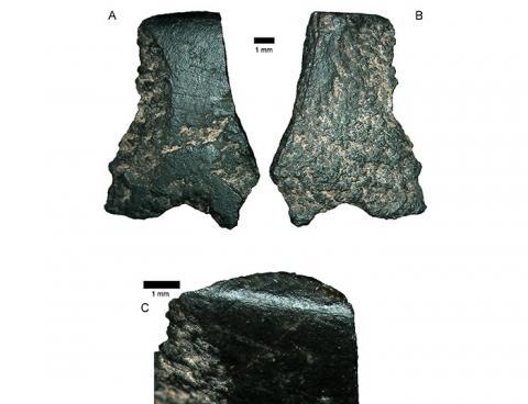 호주에서 발견된 돌도끼 조각 ⓒ Australian National University