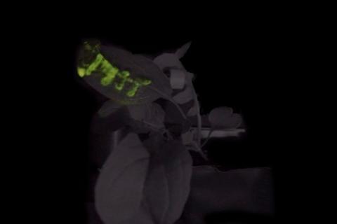 아루굴라 잎에 MIT라고 써 넣은 모습. ⓒImage: Seon-Yeong Kwak