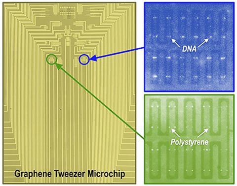 미네소타대 연구팀이 개발한 대규모 그래핀 전자 핀셋 배열을 포한한 마이크로칩. 칩에 포집된 DNA 분자와 폴리스티렌 형광 이미지.  Barik et al., University of Minnesota