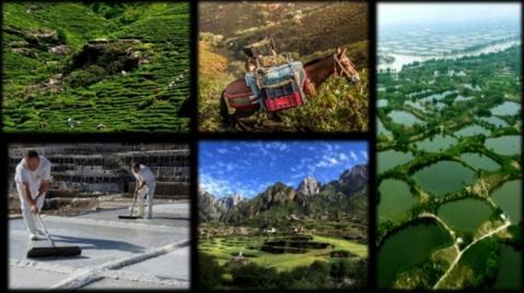 FAO에 등재되어 있는 전 세계의 주요 농업유산들 ⓒ Fao.org