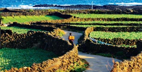 지난 2014년에 국내에서는 처음으로 세계중요농업유산으로 등재된 제주밭담 ⓒ jejuopen.com