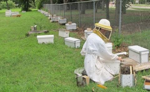 양봉업자들은 꿀벌 급감의 원인으로 살충제를 지목했다