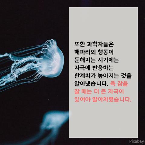 해파리 (7)