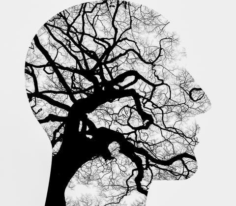 알츠하이머병의 원인 중 하나인 뇌의 아밀로이드 베타 단백질 수치가 높은 사람일수록 불안 증상이 증가하는 경향을 보여, 불안 증상이 알츠하이머병의 예측인자가 될 수 있다는 연구가 나왔다.  Credit : Pixabay