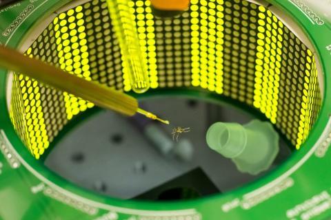 연구팀이 사용한 벌레 비행시뮬레이터 ⓒ  Photo by Kiley Riffell