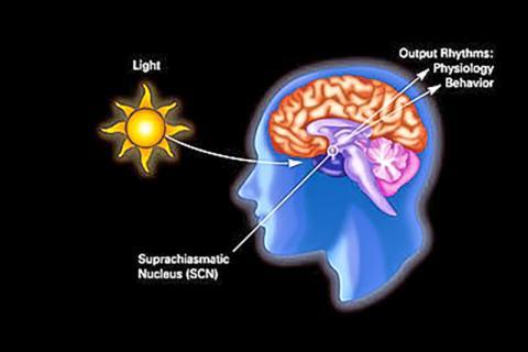 어두움-빛의 리듬이 일주기 리듬과 관련해 인체 생리와 행동에 미치는 영향을 보여주는 다이어그램. CREDIT: National Institute of General Medical Sciences