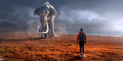 상아 없는 코끼리, 야행성으로 변한 코끼리 등 코끼리가 인간들의 해악에 의해 이상한 진화가 이루어지고 있다.  ⓒ Pixabay