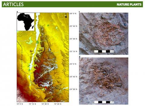 논문에 실린 타카코리 위치(왼쪽)와 이곳에서 발견된 곡물 모습. CREDIT: Nature Plants