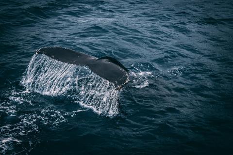 고래 덩치가 큰 것은 불가피안 생존전략이다. ⓒ Pexels
