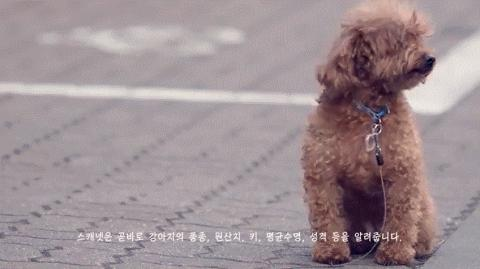 스마트폰으로 강아지를 인식시키면 강아지의 정보를 불러온다.  ⓒ 스캐넷체인