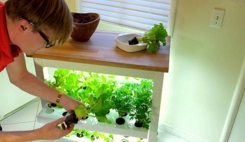 스마트 기술로 식물생장에 필요한 모든 것이 자동으로 공급된다. 집 안에서도 쉽게 농작물을 재배할 수 있다.(사진 = 클릭앤그로우 스마트 화분) ⓒ youtube.com : Click & Grow Robot Garden