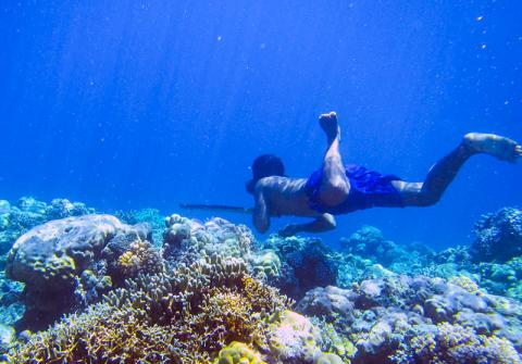 바자우 족 다이버가 작살을 들고 바다 속에서 물고기를 사냥하고 있다. 이들은 1000년 이상 바다에서 식량을 얻어 생활해 왔으며 70m까지 잠수가 가능하다.  CREDIT : Melissa Ilardo