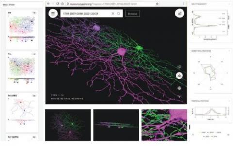 망막의 신경절세포 유형이 구축된 온라인 가상전시관 홈페이지  ⓒ 과학기술정보통신부