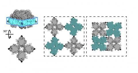 연구팀이 개발한, 다공성과 밀도 사이의 여러 상태를 전환할 수 있는 단백질 시트. 결정 격자의 세포는 사각형 형태의 모서리에서 구멍을 열고 닫을 수 있는 경첩처럼 돼 있다.   Credit: Robert Alberstein et al.