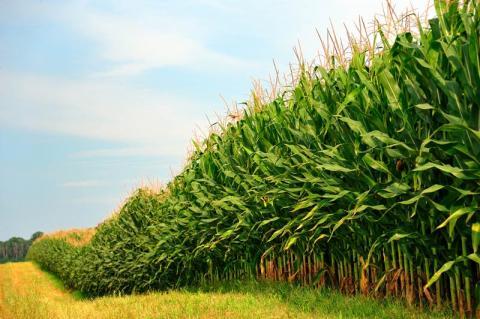 식물이 뿌리를 통해 생존을 위한 중요한 정보들을 공유하고 있다는 연구 결과가 발표돼 주목을 받고 있다. 식물이 대화를 나눈다는 주장에 힘을 실어주면서 세계적으로 큰 주목을 받고 있다.  ⓒpro-soil.com