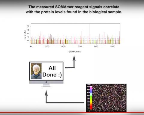 소마스캔에서 측정된 시약 신호가 분석 대상의 단백질 수준을 표시해 준다.  Source: SomaLogic homepage