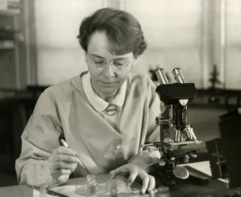 옥수수에서 튀는 유전자를 발견해 노벨상을 받은 바바라 매클린톡의 평소 연구 모습. ⓒ Public Domain