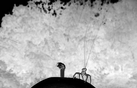 거미줄을 연처럼 띄워 비행준비를 하고 있는 크랩 거미 ⓒ Berlin univ