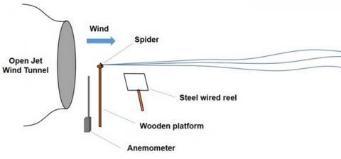 크랩 거미의 비행능력을 파악하기 위한 풍동실험 ⓒ Berlin univ