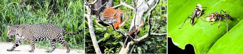 지구상에서 가장 풍부한 생물상을 지닌 남미 아마존 지역. Credit: Wikimedia Commons