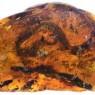 최초의 뱀 화석, 호박에서 확인