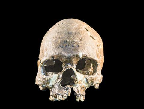 말레이시아 반도의 고고학 유적지인 구아 차(Gua Cha)에서 발굴된 호아비니안인의 두개골 CREDIT: Fabio Lahr