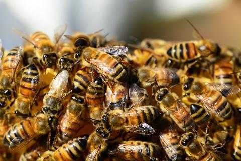 복잡계의 대표적인 모습은  벌에서 볼 수 있다. ⓒ Pixabay