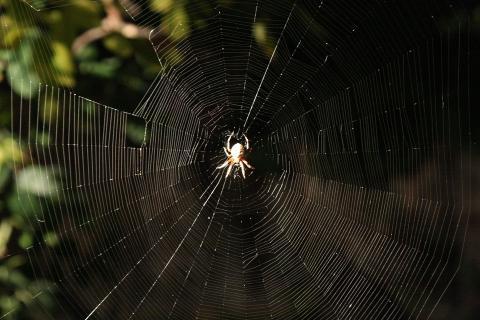 찰스 다윈 이후 과학자들이 큰 의문을 품었던새처럼 나르는 거미의 비밀이 최근 과학자들에 의해 밝혀지고 있다. 기류를 타고 흐르는 정전기를 활용하고 있는 것으로 나타나고 있다.   ⓒ ScienceTimes