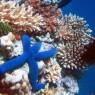 해양 생태계 비상, 심해 산호초도 죽어가고 있다