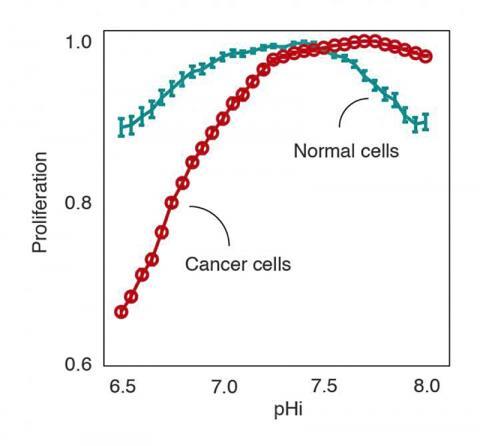 서로 다른 세포 내 pH에서 건강한 종양세포들이 증식되는 상황을 전산상으로 예측한 도표. 암세포들은 기본 pH에서는 잘 증식하지만, 산성 pH에서는 취약해 진다. CREDIT: Miquel Duran-Frigola, IRB Barcelona