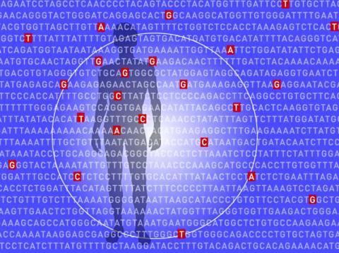 연구팀은 대규모 전장유전체 연관 연구를 통해 확보한 데이터로 각 질병과 관련된 유전적 변이를 식별하고 모든 변이 정보를 하나의 '다원유전적 위험 평가'로 통합했다.  CREDIT: Lauren Solomon