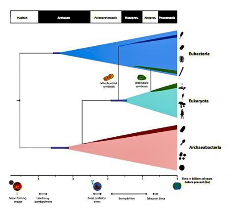 이번 연구를 요약한 지구상 생명 진화의 시간표. CREDIT: University of Bristol