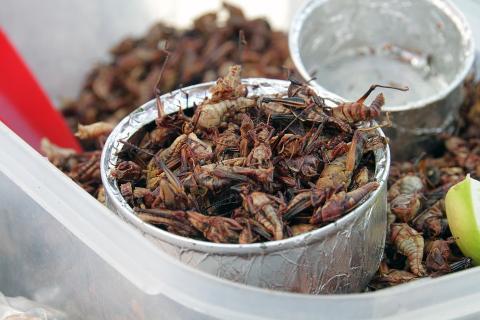 맛있는 메뚜기 요리  ⓒ Pixabay