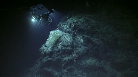 미세 플라스틱, 산업폐기물, 저인망 어선 등에 의해 바다 생물자원이 고갈되고 있는 가운데 아직까지 자연 상태로 남아있는 야생영역이 13%에 불과하며, 빠르게 줄어들고 있다는 연구 결과가 발표됐다. 사진은 깊은 바다속 탐사 장면. ⓒschmidtocean.org