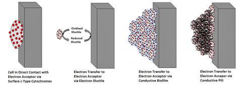 과학자들이 제안한 엑소일렉트로겐이 전자를 전달하는 방법. 왼쪽부터 직접 전송, 전자 셔틀을 통한 전송, 전도성 바이오 필름을 통한 전송, 전도성 필리(Pili)를 통한 전송. CREDIT: Wikimedia Commons / Aiox82