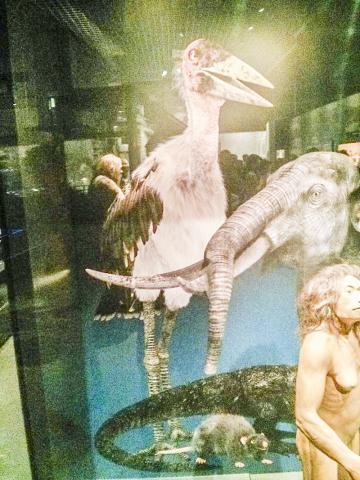 호모 플로레시언시스를 포함해 플로레스 섬에 살았던 거대한 쥐와 황새 및 난쟁이 코끼리를 복원한 모습.  CREDIT : Wikimedia Commons /Jony Cooper / Reconstruction of Homo floresiensis, National Museum of Nature and Science, Tokyo