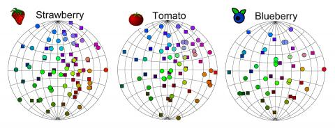 연구팀은 냄새 분자가 자연에서 얼마나 자주 발생하는지에 따라 이를 지도화하고 냄새 조합 영역을 발견했다. 동그란 원은 구의 정면에 있는 점을 나타내며, 작은 정사각형은 구의 뒷면에 있는 점을 나타낸다.  CREDIT: Salk Institute