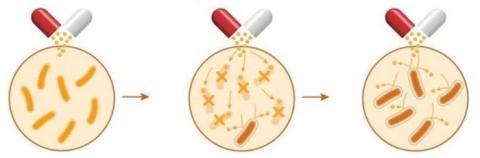 항생제에 대해 세균이 내성을 가지는 과정 ⓒ healthnavigator.org