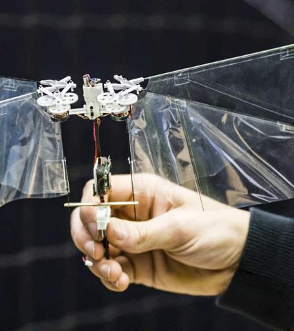 이 비행로봇은 29g 무게에 날개 폭 33cm로, 완전 충전된 배터리로 5분간 공중 비행을 하거나 1km 이상 비행할 수 있다. Photos: MAVLab TU Delft