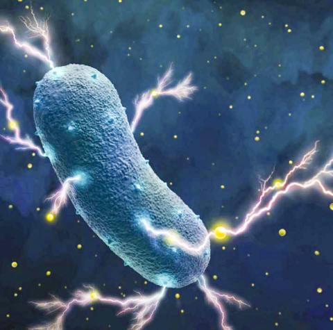 리스테리아균이 주위에 흔한 플라빈 분자(노란점)의 도움을 받아 세포 벽을 통해 전자를 미세 전류로 주변에 전송하는 일러스트.  CREDIT : Amy Cao graphic. Copyright UC Berkeley