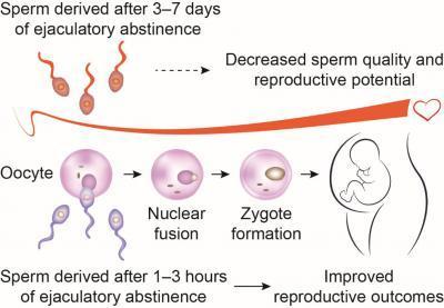 민간의 풍속과는 달리 부부관계 전 금욕 기간이 길면 오히려 임신 가능성이 낮고 사정 뒤 불과 1~3시간 뒤 다시 부부관계를 가질 경우 임신 가능성이 높다는 사실이 밝혀졌다. 이는 후자의 정자가 운동성이 크고 상태도 좋기 때문이다.