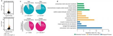 유전체학적 분석에서의 성별 이형성 설명도. ⓒ 기초과학연구원