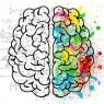 뇌에서 가장 많은 칼로리 소비한다
