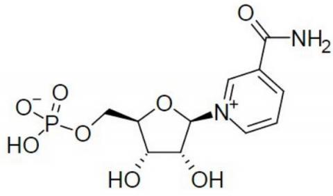 회춘약으로도 불리는 NMN의 분자구조 ⓒ wikipedia